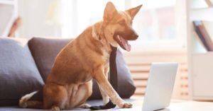clínica veterinaria blog