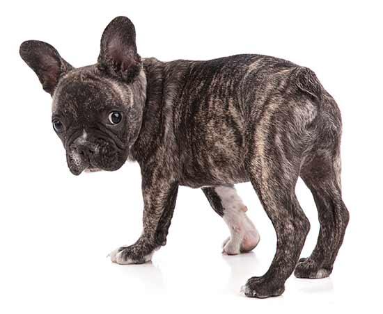 descuentos planes de salud para perros cachorros