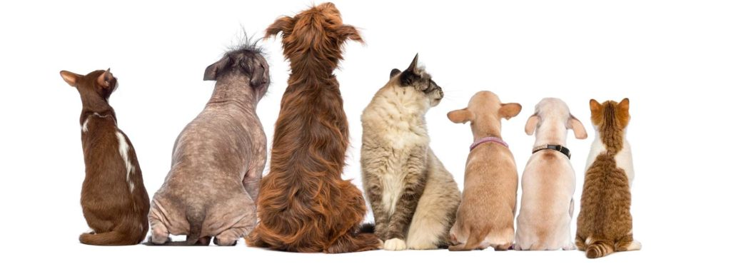clínica veterinaria para perros y gatos en madrid