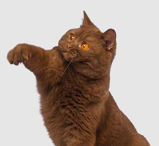 plan de salud para gatos en madrid
