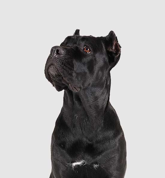 descuentos planes de salud para perros