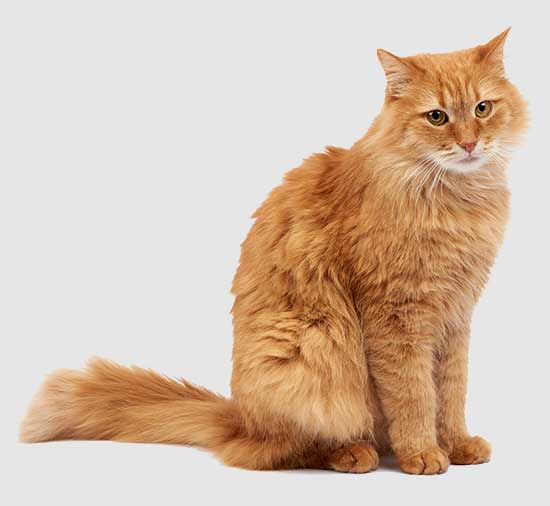 plan de salud para gatos adultos