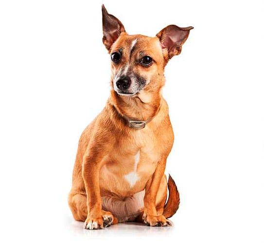 plan de salud para perros adultos