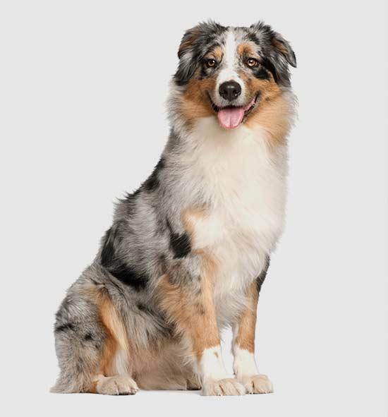 descuentos planes de salud para perros adultos